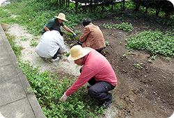 共同住宅庭の環境整備の写真
